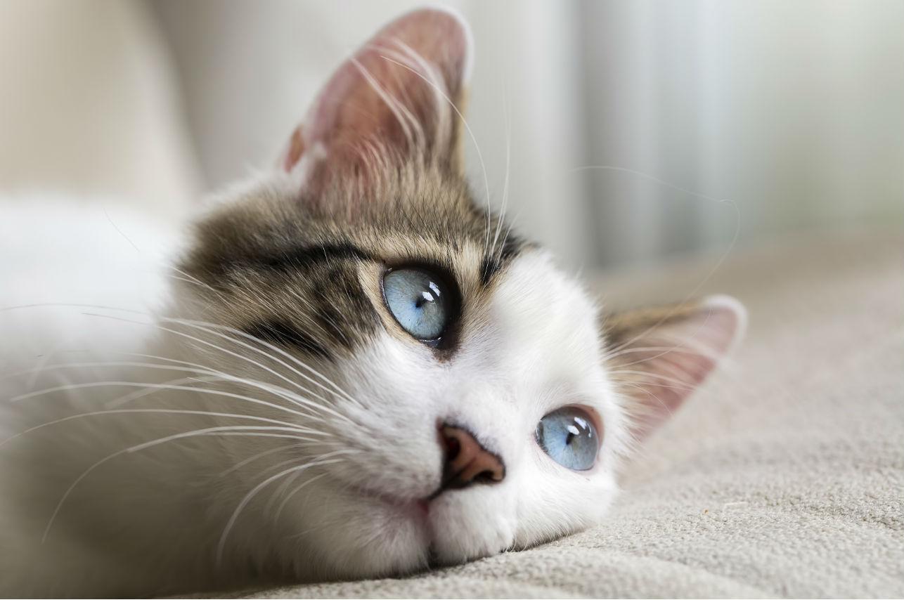 Grecia tiene el trabajo ideal para los amantes de los gatos