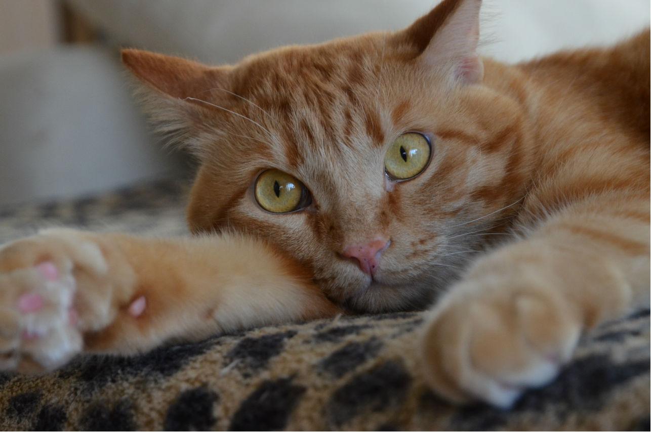 Manny, el gato que conquista Instagram con selfies