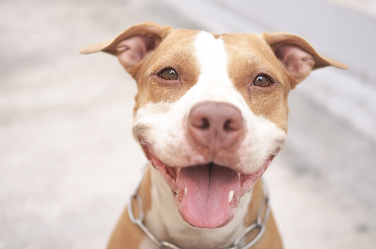 NO a la violencia: El perro es reflejo de su dueño