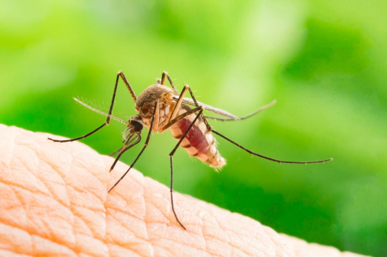 Repelentes naturales para mosquitos que seguro tienes en tu cocina