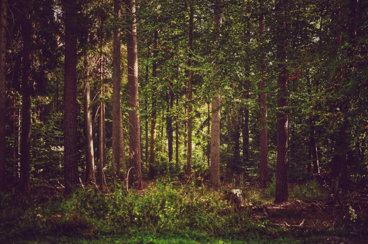 El bosque más bonito del mundo está en México
